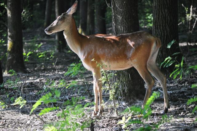 Kirándulás a Gemenci-erdőben
